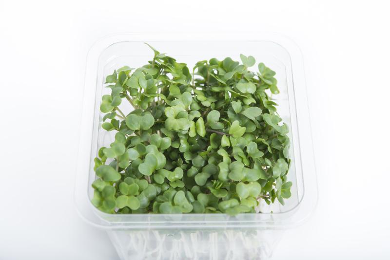 スプラウトの栽培方法