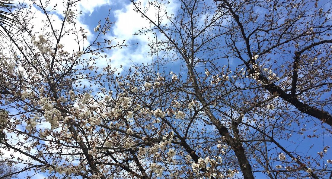 お花見で活躍するフリーズドライ食品5選