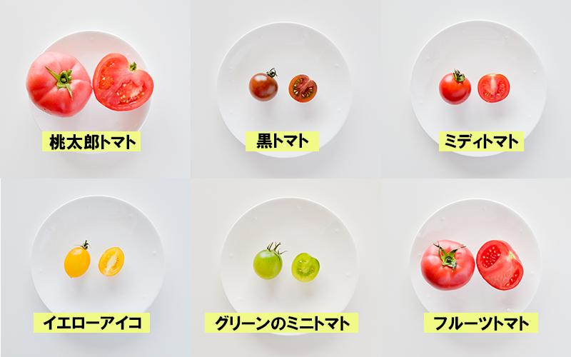 桃太郎トマト 黒トマト ミディトマト イエロートマト グリーンのミニトマト フルーツトマト