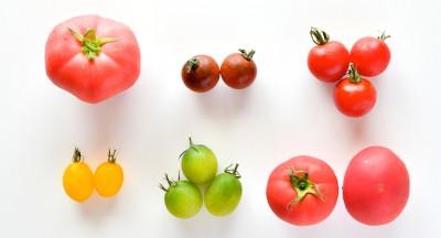 色違いのトマト、味の違いは?
