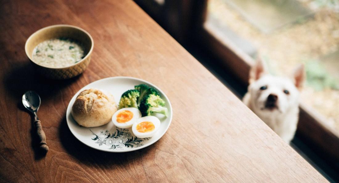 ARABIAの食器とキップル