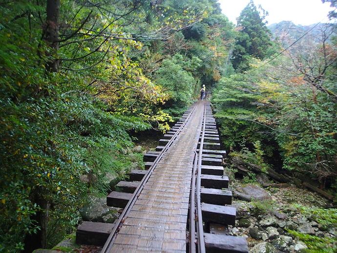 屋久島縄文杉トロッコ道の写真