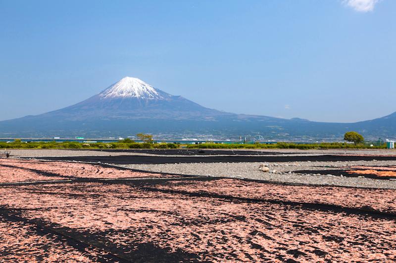 富士山と天日干し桜えび