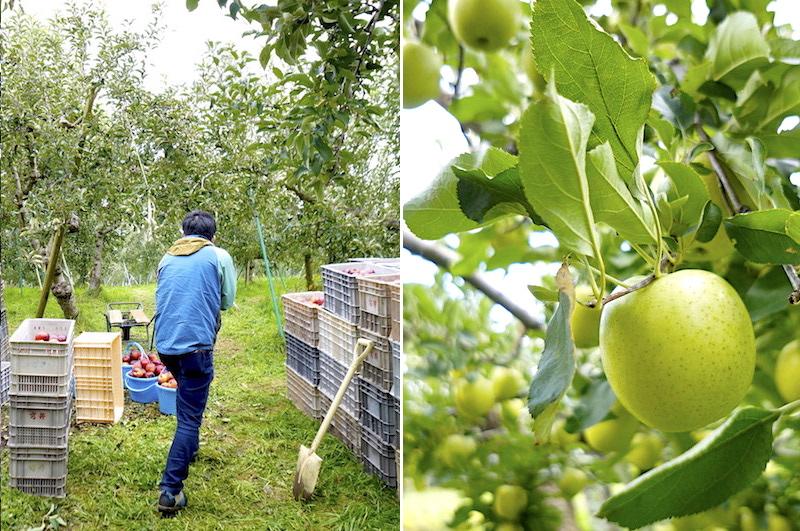 戸田農園りんご王林