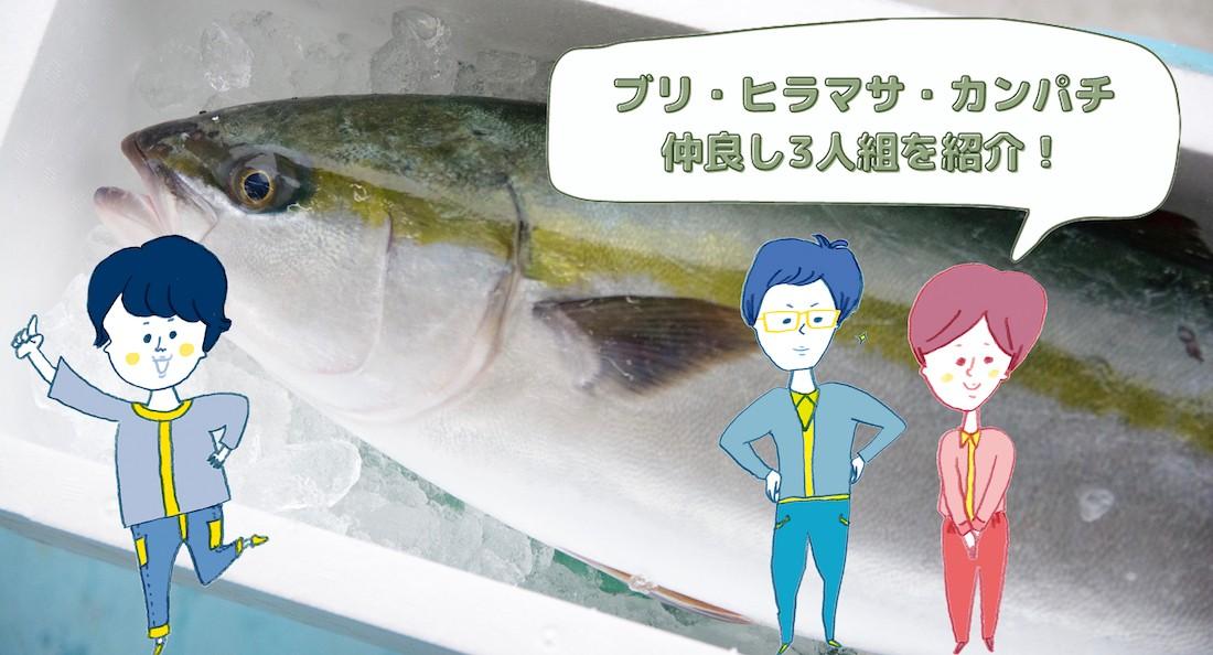 漫画で解説】出世魚「ブリ」の特徴と「カンパチ」「ヒラマサ」との違い ...